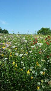 Ann Wakeman's Prairie